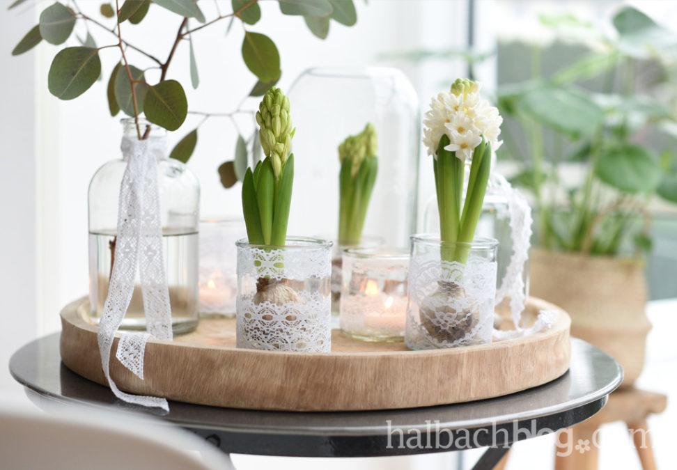 Erste Frühlingsahnung mit Spitze und Hyazinthen